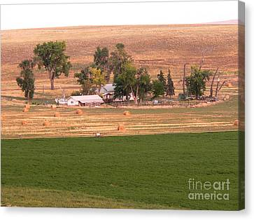 Montana Harvest Time Canvas Print by David Bearden