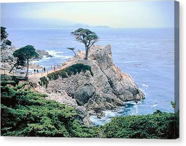 Monterey Cyprus  California Seacoast Seascape Picture Decor Canvas Print by John Samsen