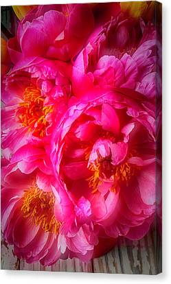 Moody Peony's Canvas Print by Garry Gay