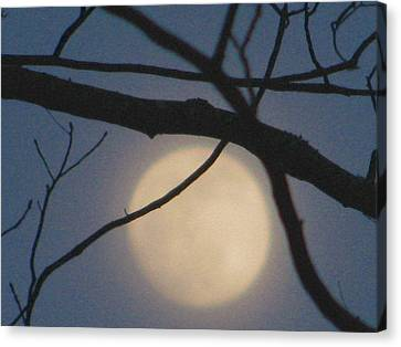 Moon Glow Canvas Print by Lindie Racz