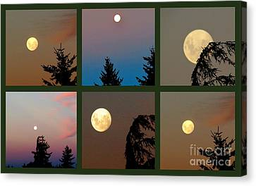 Moon Time Canvas Print by Joyce Woodhouse
