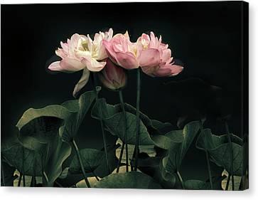 Moonlight Lotus Canvas Print by Jessica Jenney