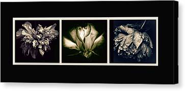 Moonlight Petals Triptych Canvas Print by Jessica Jenney
