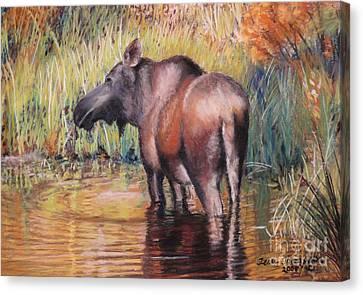 Moose In Alaska Canvas Print by Terri Thompson