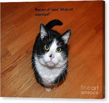 More Words From  Teddy The Ninja Cat Canvas Print by Reb Frost