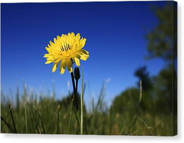 Morning Flower Canvas Print by Gulf Island Photography and Images