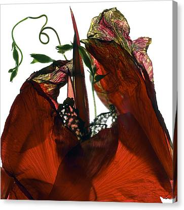 Morning Glory Canna Red Canvas Print by Julia McLemore