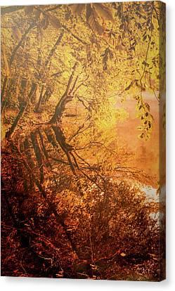 Morning Light Canvas Print by Okan YILMAZ