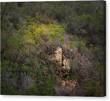 Morning Light On A Hillside Canvas Print by Joseph Smith