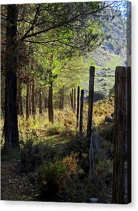 Morning Light On The Mountain, Andalucia, Spain  Canvas Print by J Darrell Hutto