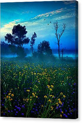 Morning Song Canvas Print by Phil Koch