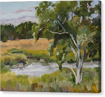 Morning Transition Canvas Print by Barbara Benedict Jones