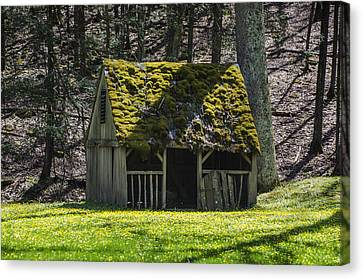 Mossy Manger In Spring Canvas Print by Bill Cannon