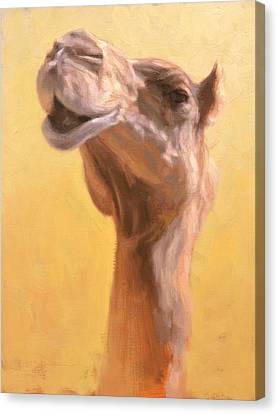 Mother Camel Canvas Print by Ben Hubbard