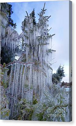 Mother Nature's Christmas Tree Canvas Print by Sandra Updyke