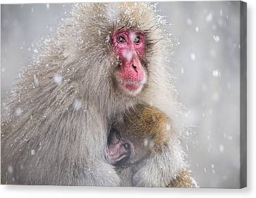Mother's Warmth Canvas Print by Takeshi Marumoto