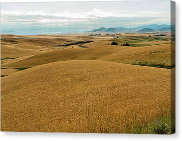 Mounds Of Grain Canvas Print by Claude Dalley