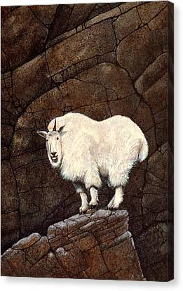 Mountain Goat Canvas Print by Frank Wilson