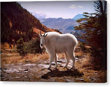 Mountain Goat Canvas Print by Patricia Montgomery