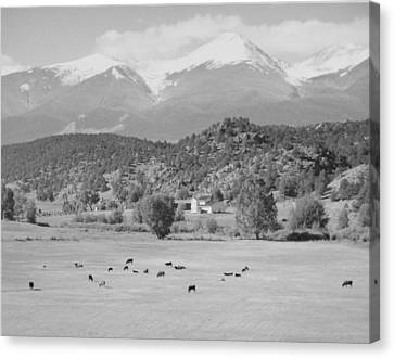 Mountain Meadow Canvas Print by Allan McConnell