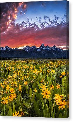 Mountain Meadow Canvas Print by Andrew Soundarajan