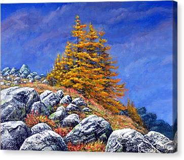 Mountain Tamaracks Canvas Print by Frank Wilson