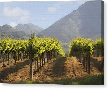 Mountain Vineyard Canvas Print by Sharon Foster