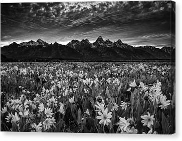 Mountain Wildflowers Canvas Print by Andrew Soundarajan