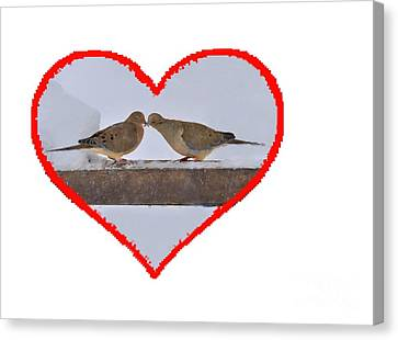 Mourning Doves Kissing Canvas Print by Dan Friend