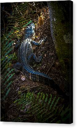 Mr Alley Gator Canvas Print by Marvin Spates