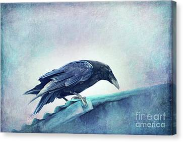 Mr. Bluebird Canvas Print by Priska Wettstein