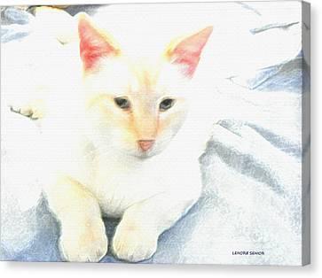 Mr. Cat Canvas Print by Lenore Senior