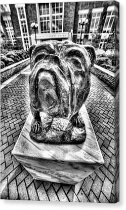 Msu Bulldog Black And White Canvas Print by JC Findley