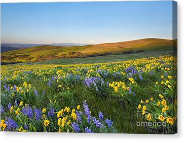 Mt. Hood Wildflower Morning Canvas Print by Mike Dawson