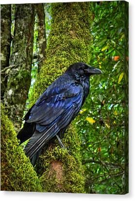 Muir Woods Raven 001 Canvas Print by Lance Vaughn
