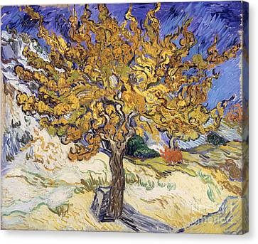 Mulberry Tree Canvas Print by Vincent Van Gogh