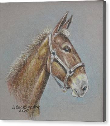 Mule Head Canvas Print by Dorothy Coatsworth