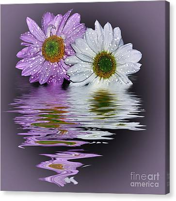 Mums Reflecting In Lilac By Kaye Menner Canvas Print by Kaye Menner