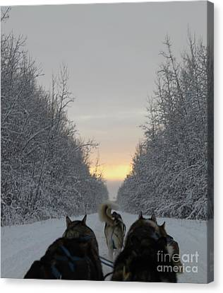 Mushing Into The Sunset Canvas Print by Tanja Hymel