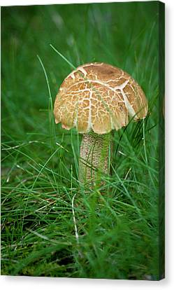 Mushroom In The Grass Canvas Print by Teresa Mucha