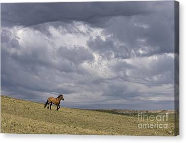 Mustang And Stormy Sky Canvas Print by Jean-Louis Klein & Marie-Luce Hubert