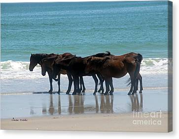 Mustangs Stopped In Action Canvas Print by Linda Troski