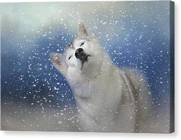 My Favorite Thing About Winter Canvas Print by Jai Johnson