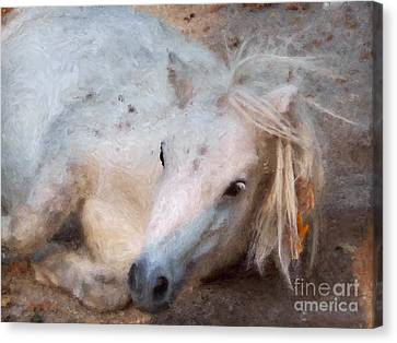 My Little Horse Canvas Print by Angela Doelling AD DESIGN Photo and PhotoArt