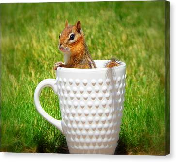 My Morning Cup Of Joe Canvas Print by Karen Cook