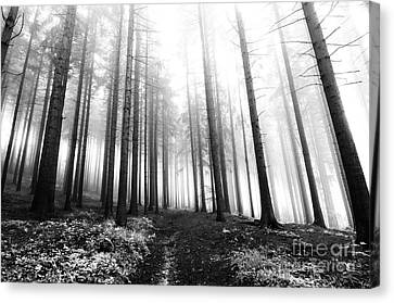 Mysterious Forest Canvas Print by Michal Boubin