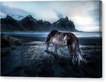 Mystic Icelandic Horse Canvas Print by Larry Marshall