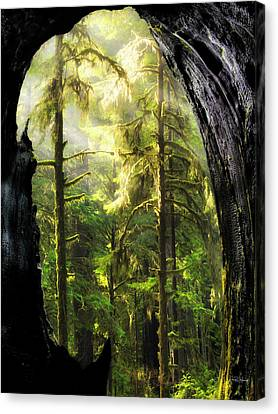 Mystical Forest Opening Canvas Print by Leland D Howard