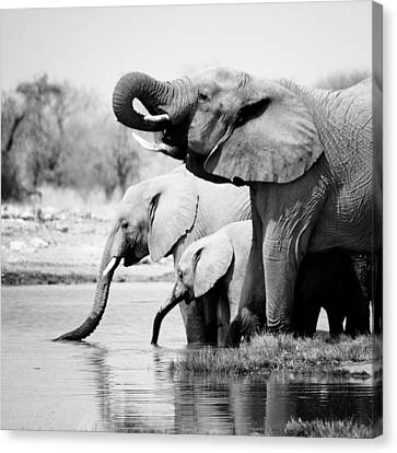 Namibia Elephants Canvas Print by Nina Papiorek