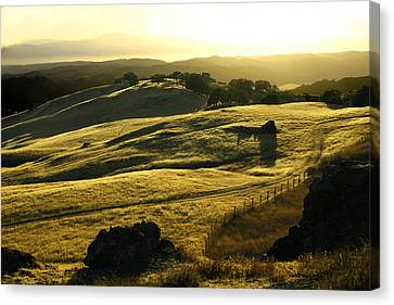 Napa Valley Canvas Print by Hans Jankowski